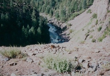Looking down at the Animas River