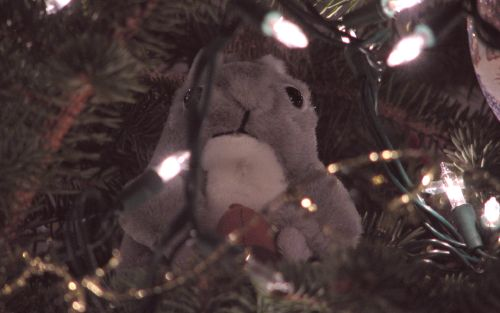 Squirrel in Christmas tree